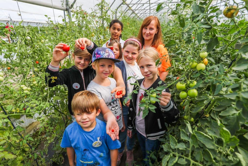 Einige Kinder stehen in einem Gewächshaus neben einigen Tomatenpflanzen und halten das Gemüse in die Kamera.