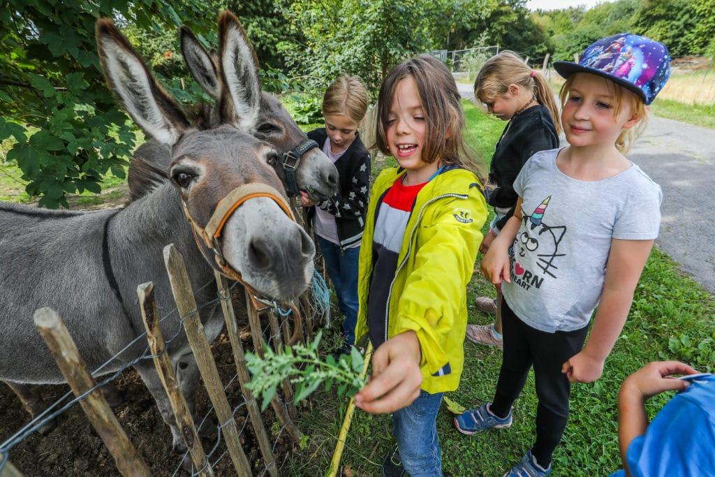 Ein Mädchen füttert einen Esel und hinter ihr sind noch andere Kinder zu sehen, die einen Esel streicheln.